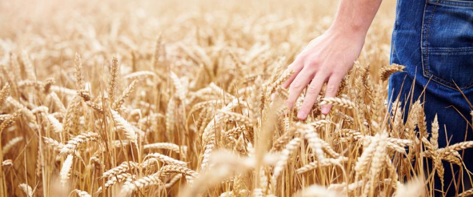 fwg-wirtschaftsberatung-landwirtschaft